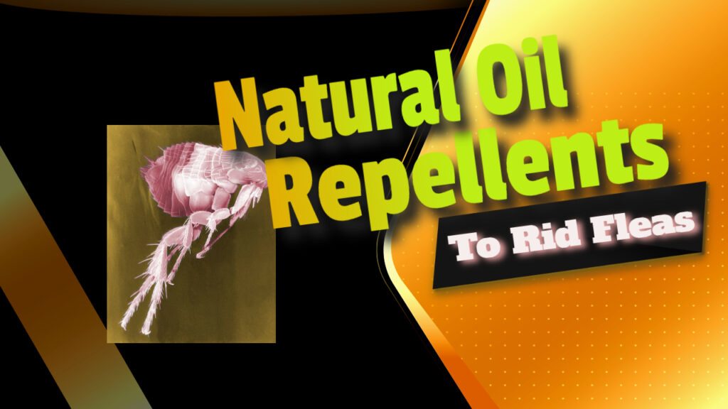 Natural Oil Repellents To Rid Fleas