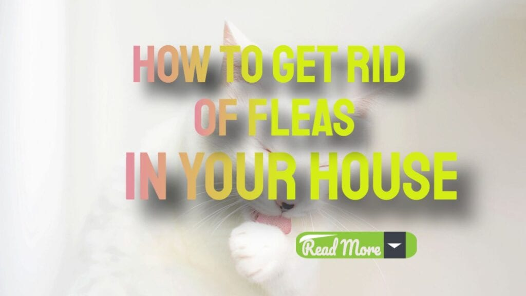 How To get Rid Of Fleas In Your House