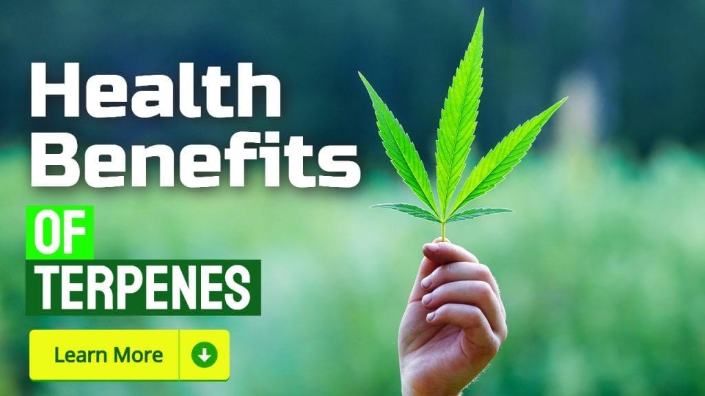 terpenes benefits