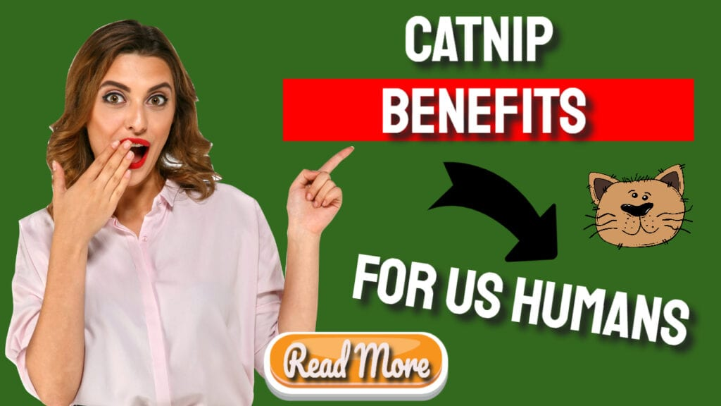 Catnip Benefits For Us Humans Too