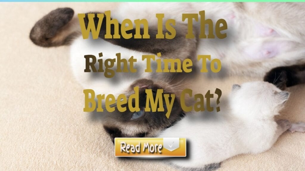 when is the right time to breed my cat